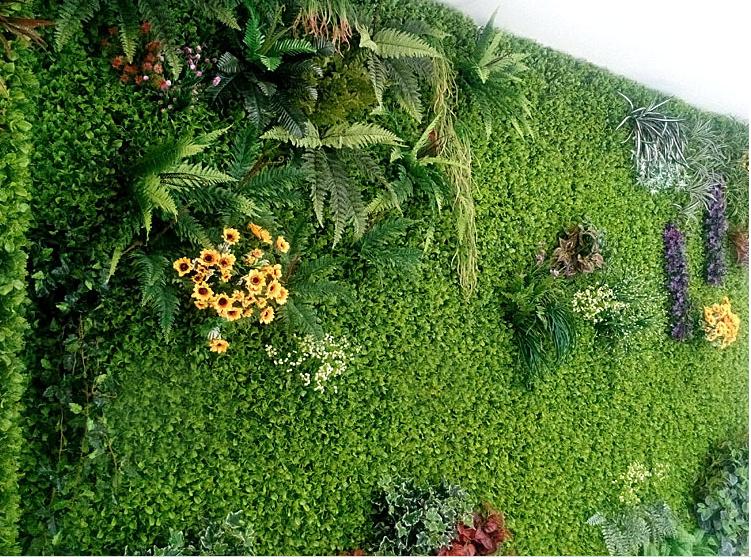 Trang trí tường bằng cỏ cải xoong